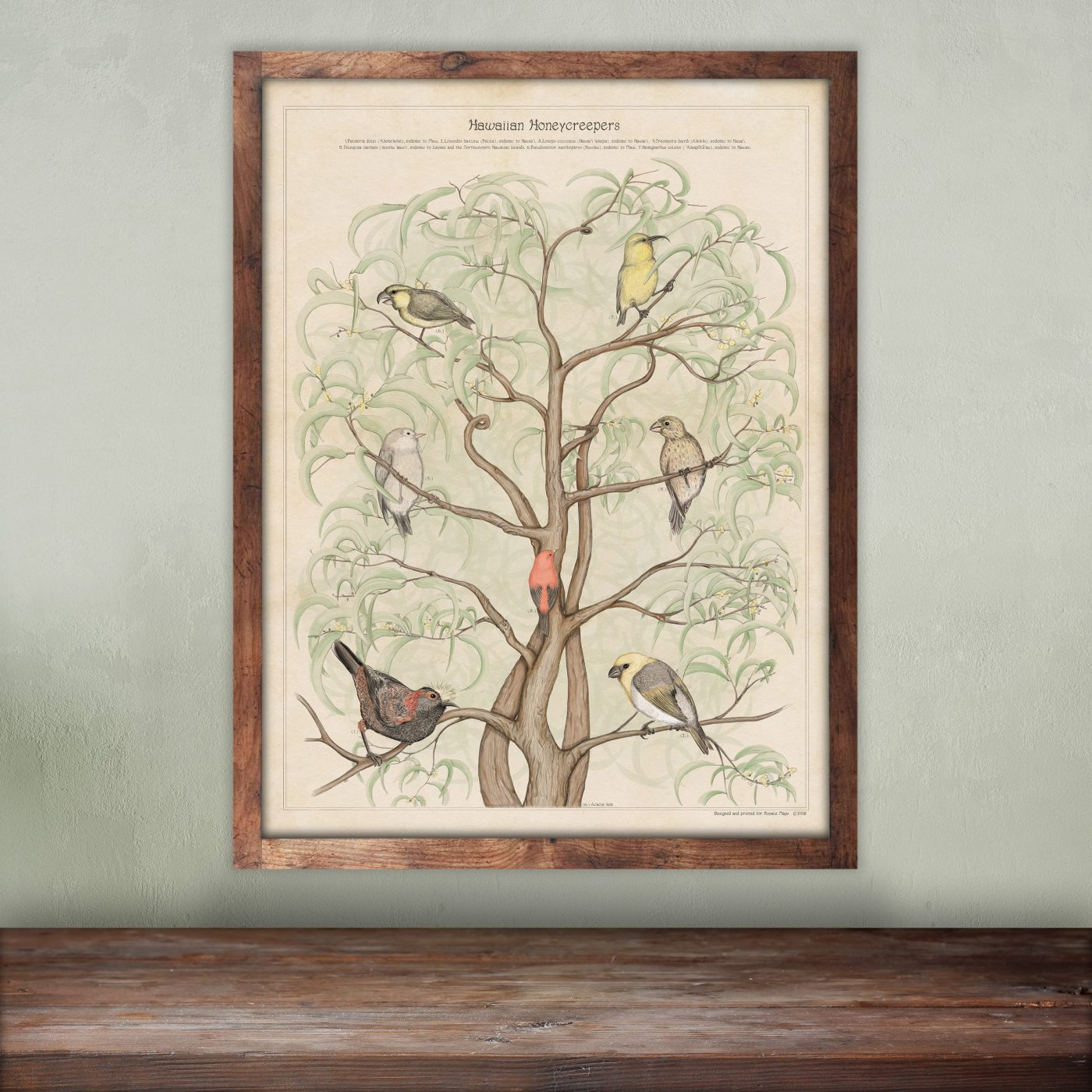 beautiful-vintage-wild-bird-print
