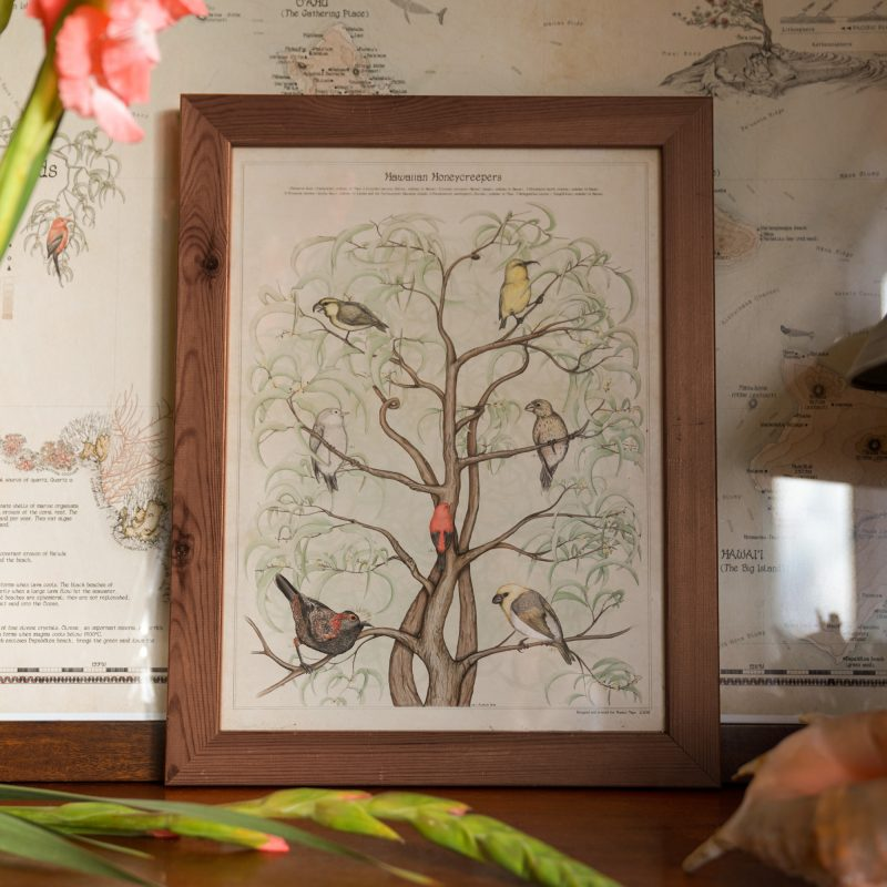 Art print of Hawaiian birds on a tree