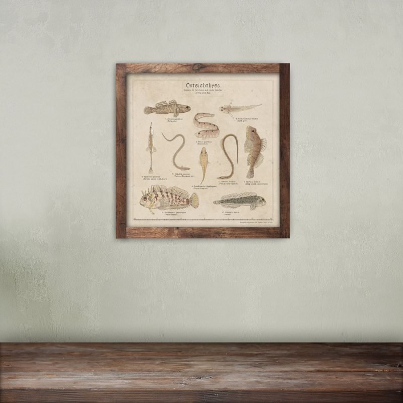 Biology art print sea fish