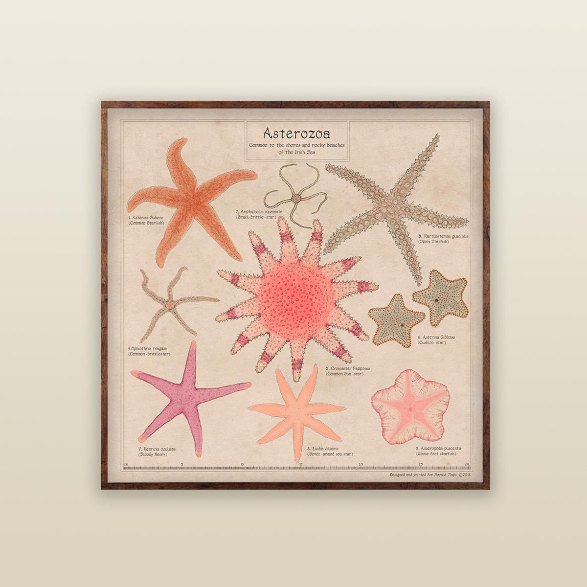 Asterozoa Print