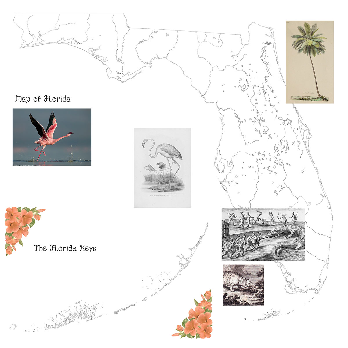 Designing the map of Florida State