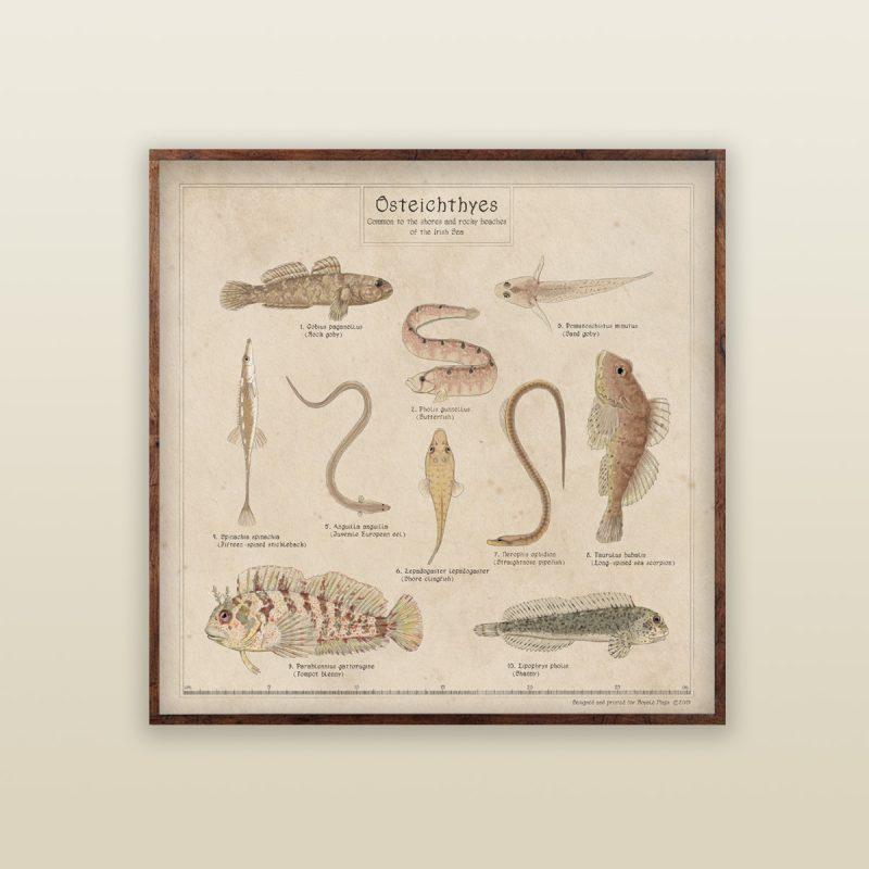Rockpool Identification for fish